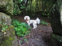 Barry at the entrance to Guisecliff Wood
