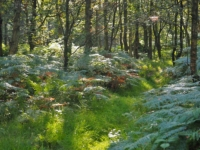 Guisecliff Wood