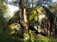 A large gristone boulder in Guiscliff Wood