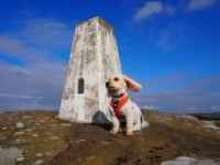 Barry by the trig point on Heyshaw Moor