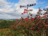 There were lots of rowan trees with their bright red berries