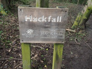 Entering Hackfall Woods