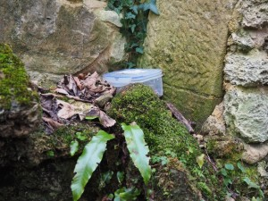The geocache hidden in The Grotto
