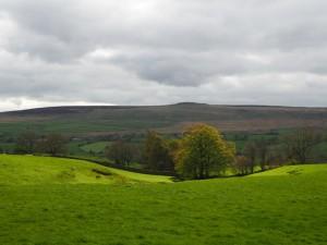 Looking across Coverdale towards Great Roova