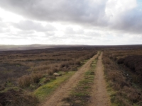 Looking back along the track on Heathfield Moor