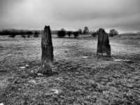 Two old gateposts in the field near Dunbars