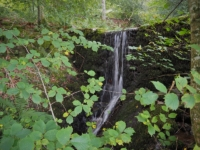 The waterfall in Park Wood