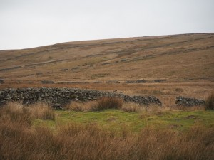 Field Walls on Sleddale Pasture