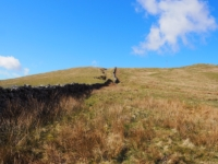 Following the wall from the gatepost on to Hoggs Hill