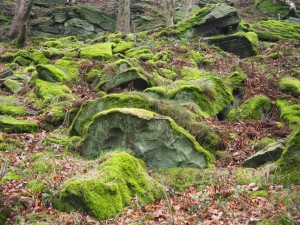Mossy rocks in Spring Crag Wood