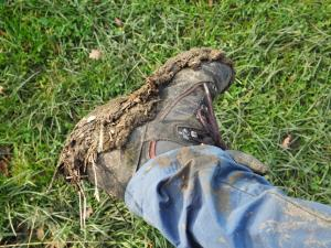 Muddy boots after walking through the crop field