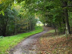 Track to St Oswald's