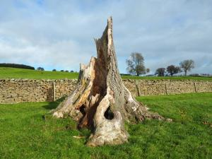 An old tree stump