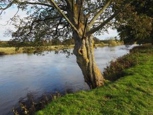 The River Ure