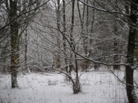 A wintry scene in the some woods above Kilnsey