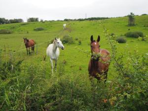 Horses alongside Eight Acre Lane