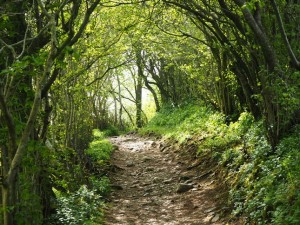 The path enters the woods