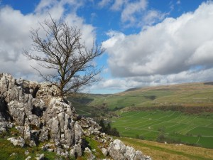 A lonely tree on Knipe Scar