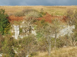 Limestone scars in Ling Gill