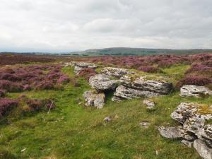 Limestone showing through the moor on Rayseat
