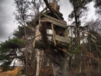 A tree house that has seen better days