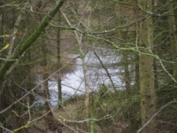 A glimpse through the trees of Brim Bray Pond