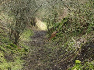 The path descending to Padley Beck from Washfold