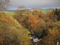 Autumn in Blayshaw Gill