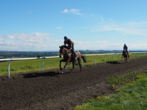 Two race horses being put through their paces