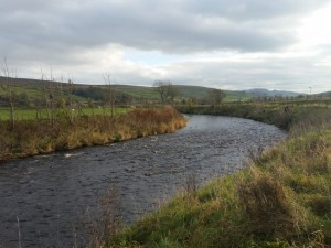 The River Ribble below Cragghill Farm