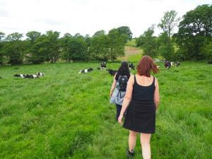 Passing some cows at High Kettle Spring