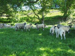 These sheep were sensibly keeping in the shade