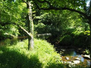 Darley Beck joining the River Nidd