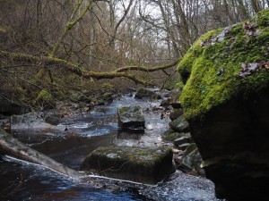 The jumble of mossy boulders and fallen trees in Whitfield Gill