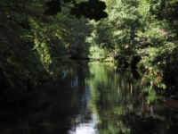 The River Nidd just upstream from the weir