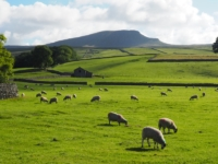 Ribblesdale pastures and Pen-y-ghent