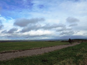 The gallops on Middleham High Moor
