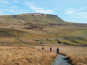 Penyghent forming the backdrop to the path climbing over Whitber Hill