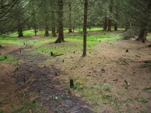 An area of strange tree stumps