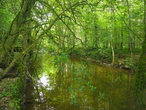 The River Lyvennet
