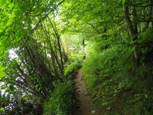 The path alongside the river in Wormrigg Wood