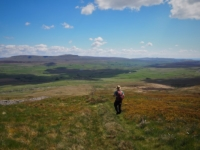 The lovely descent of Park Fell with Ribblesdale ahead of me