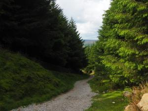Looking back down the path