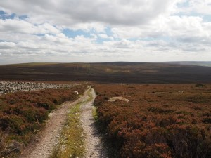 The track towards Hazelwood Moor