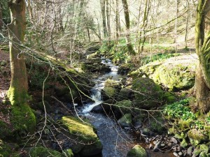 Crossing Fosse Gill in Skrikes Wood