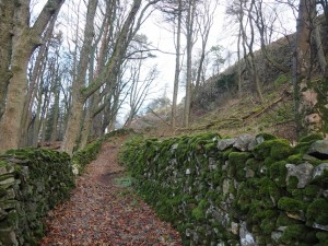 The path up through the woods above Langthwaite
