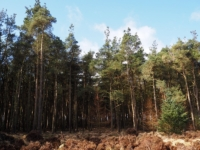 The plantations of Stainburn Forest