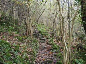 The path winding its way up through the woods