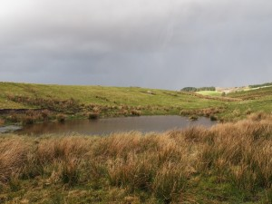 A small tarn alongside the bridleway