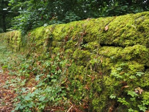 The mossy wall above the reservoir near Swinsty Hall